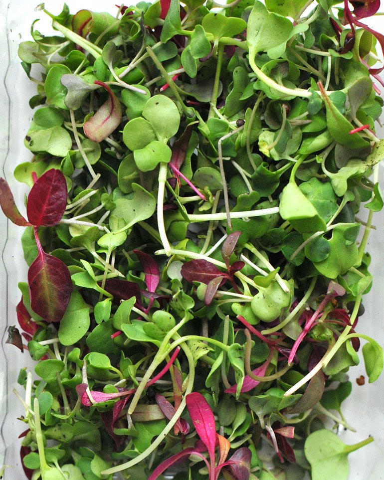 spring micro greens